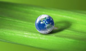 Picture of a small world on a plant leaf